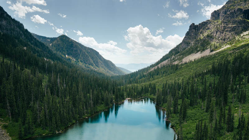 National park forest in Montana